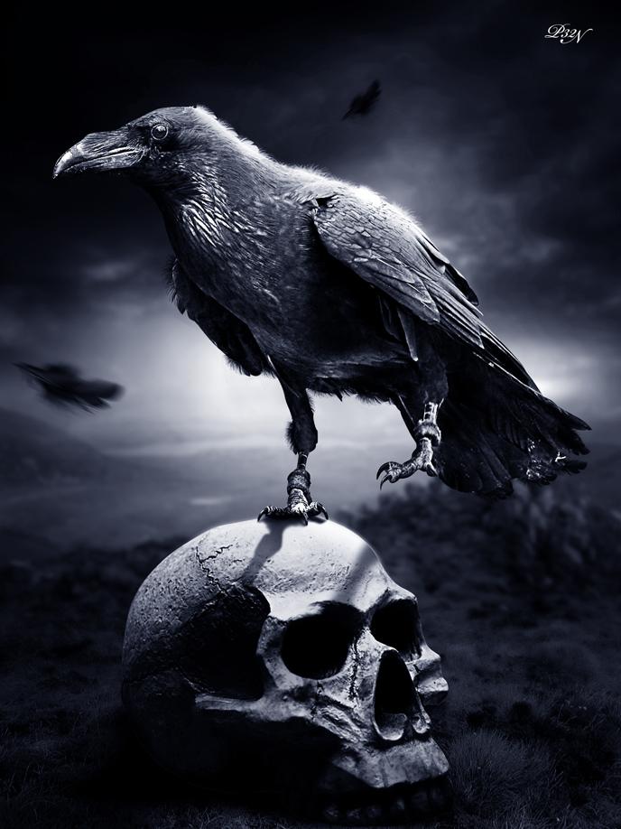 raven_dark_by_p32n-d32ob14